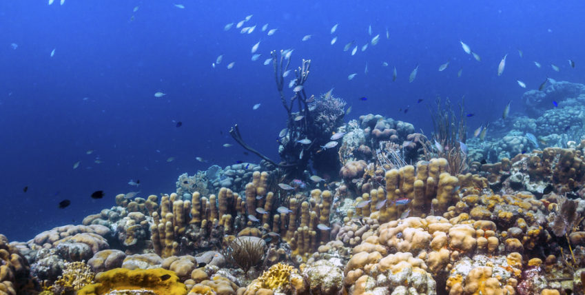 Koraalrif Bonaire